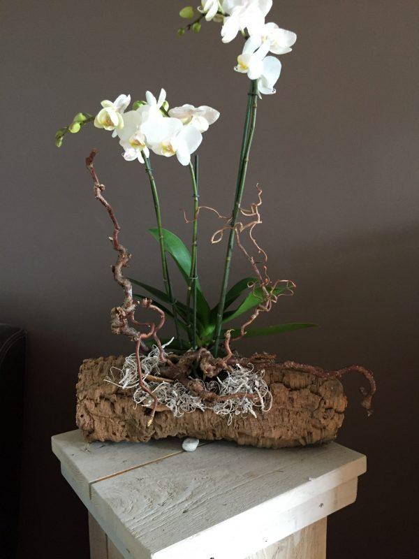 Orchideeëncreatie