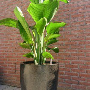 Bedrijfsplanten & Pottery